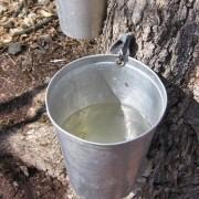 eau erable